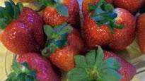 strawberries, summer fruit, fresh fruit, summer treat, dish dish, online cookbook, organize recipes online