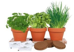 Indoor Herb Garden Giveaway
